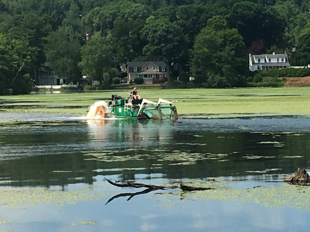 Mechanical harvester removing water chestnut, July 8, 2019