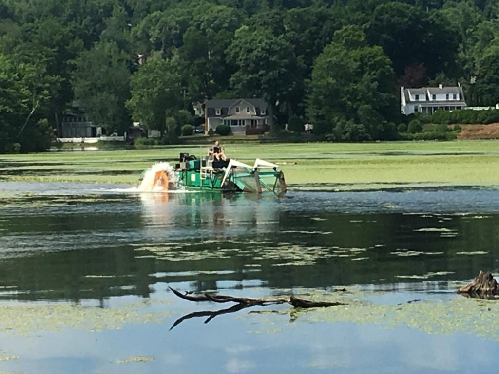 Mechanical harvester removing water chestnut, July 8, 2019